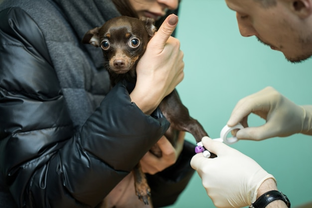 Clínica veterinária para cães com cateter