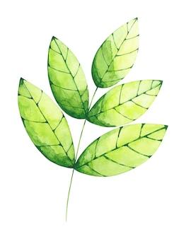 Clip-art em aquarela de folha verde isolado no fundo branco.