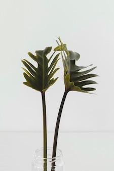 Close abstrato de planta mínima