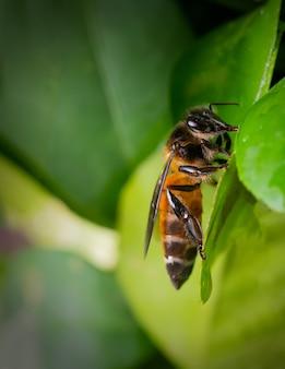 Close da abelha na folha da planta