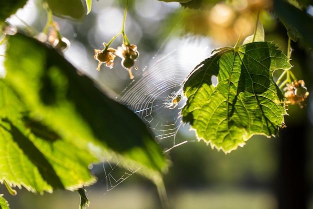 Close da aranha verde, folhas e macro de aranha