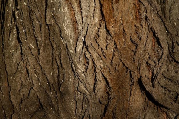 Close da casca da árvore