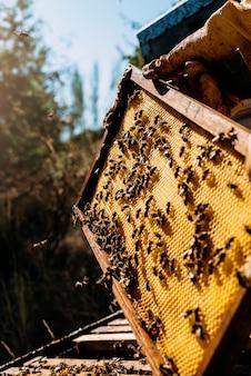 Close da colmeia com abelhas