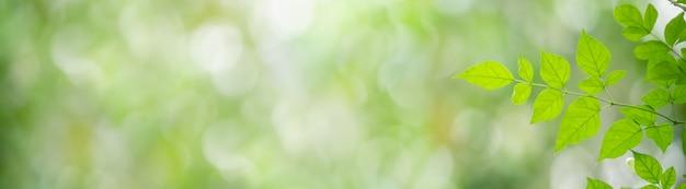 Close da folha verde da natureza no fundo desfocado da vegetação