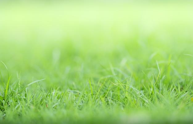 Close da grama verde na vegetação desfocada e a luz do sol no jardim usando como planta verde natural