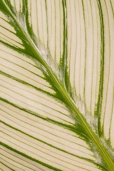 Close da haste da folha da planta com textura
