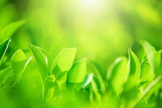Close da natureza com folhas verdes em um fundo verde desfocado sob a luz do sol da manhã com bokeh