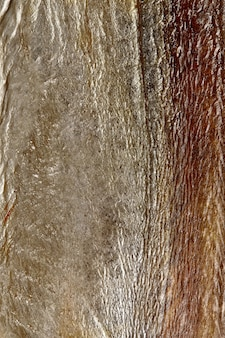 Close da pele prateada de peixe-sabre salgado e seco ao ar