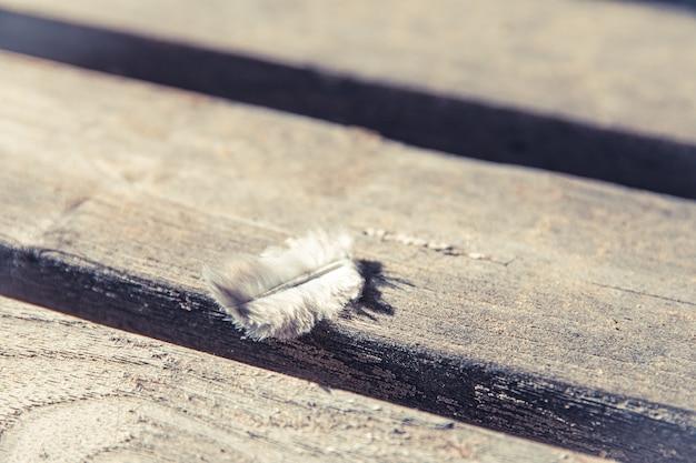 Close da pena de um pássaro em uma superfície de madeira enferrujada