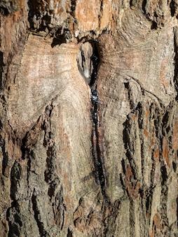 Close da resina fluindo de uma rachadura em uma árvore