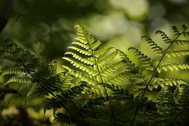 Close da samambaia na floresta