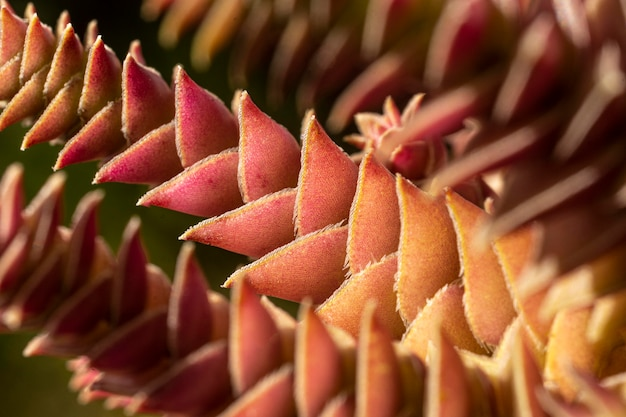 Close da textura da planta