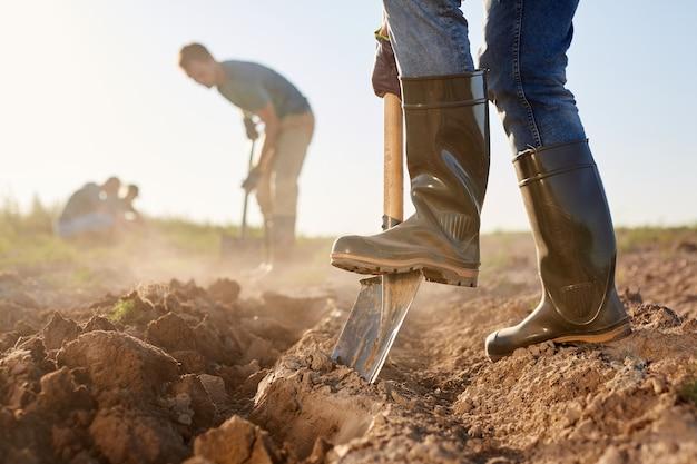 Close da vista lateral de trabalhadores irreconhecíveis cavando o solo com pás e plantando em uma plantação de vegetais ao ar livre iluminada pela luz solar, copie o espaço
