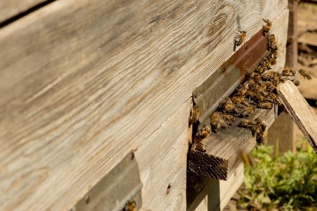 Close das abelhas trabalhando trazendo pólen de flores para a colmeia