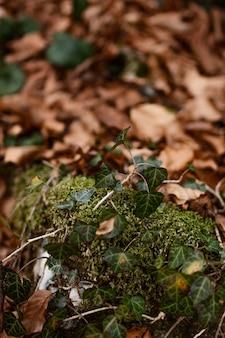 Close das folhas da floresta selvagem