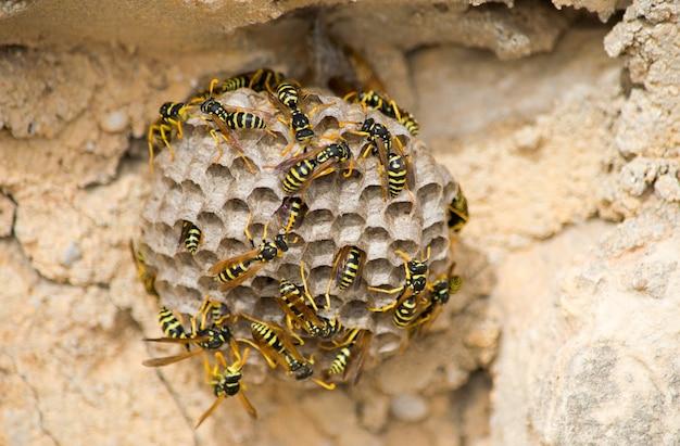 Close de abelhas em um grande ninho de vespas de papel sob a luz do sol