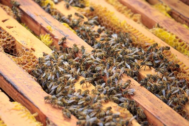 Close de abelhas em uma colmeia sob a luz do sol