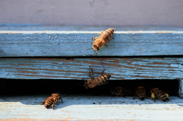 Close de abelhas em uma superfície de madeira durante o dia