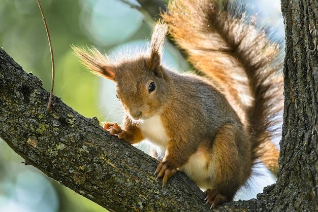 Close de ângulo baixo de um esquilo no galho de uma árvore sob a luz do sol