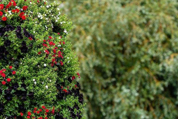 Close de arbustos ornamentais com flores em um parque desfocado