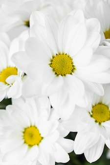 Close de arranjo de flores brancas