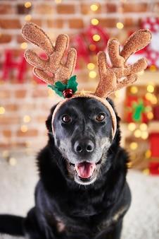 Close de cachorro com chifres de rena