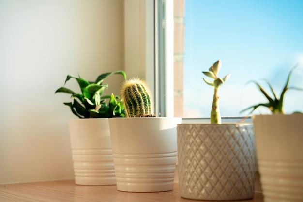 Close de cacto em uma janela com iluminação doméstica