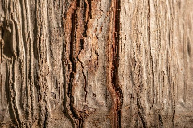 Close de concha de árvore de fundo orgânico