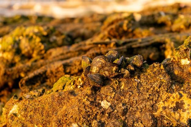 Close de conchas antigas no chão, cobertas de sujeira e musgo sob a luz do sol