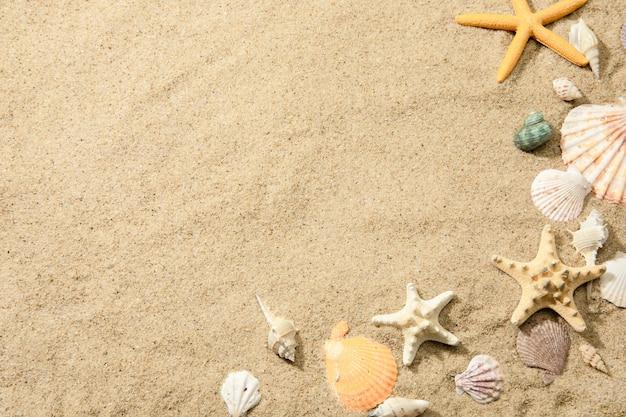 Close de diferentes conchas em uma praia arenosa, uma superfície com espaço para texto