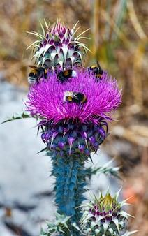 Close de duas abelhas em uma flor de ervas daninhas
