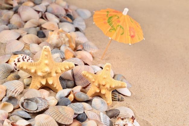 Close de estrelas do mar e conchas em um fundo de areia