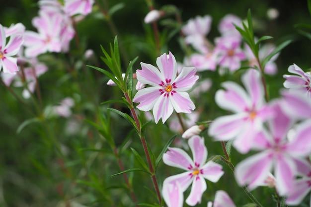 Close de flores rosa em um jardim capturado durante o dia