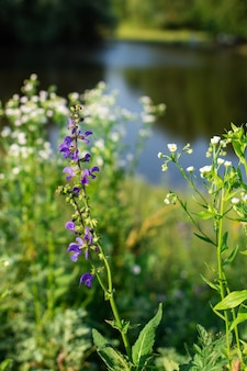 Close de flores silvestres em um prado em uma vila à beira do lago, recreação ao ar livre de verão