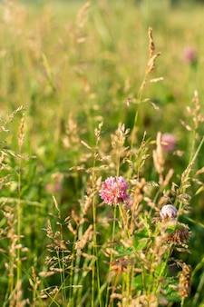 Close de flores silvestres em um prado em uma vila, recreação ao ar livre de verão