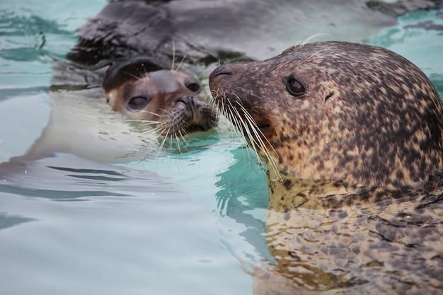 Close de focas na água sob a luz do sol