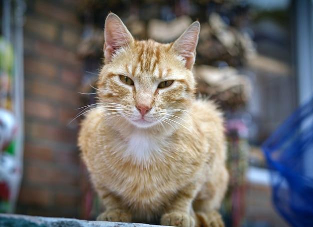 Close de foco seletivo de um gato malhado sentado ao ar livre