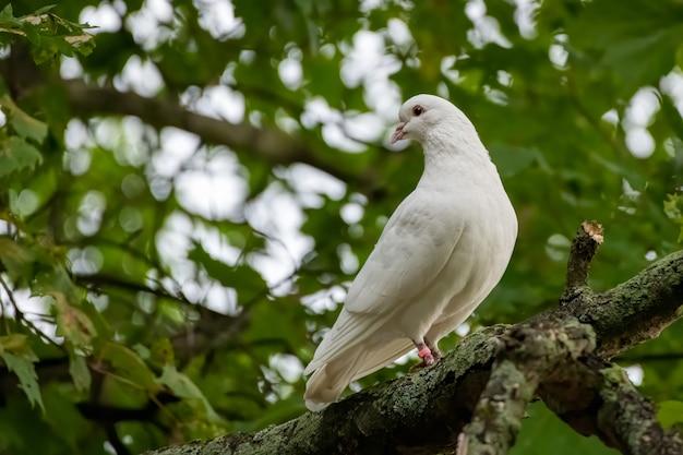Close de foco seletivo de uma pomba branca empoleirada no galho de uma árvore