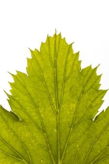Close de folha com nervuras e bordas