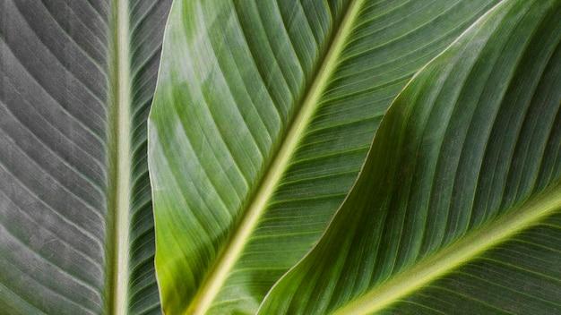 Close de folhas de plantas tropicais