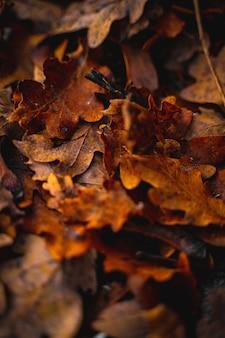 Close de folhas secas de outono no chão