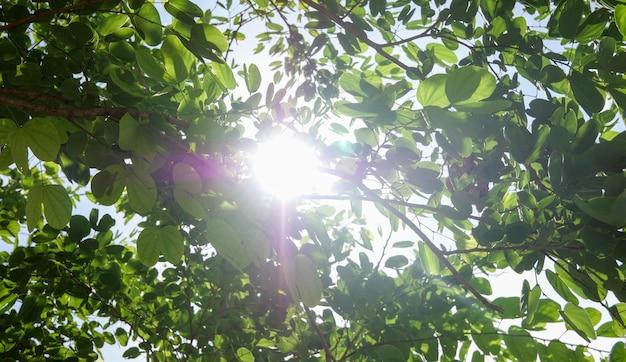 Close de folhas verdes, emoldurando o fundo da floresta e o sol lançando seus quentes raios dourados pela folhagem