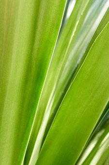 Close de folhas verdes
