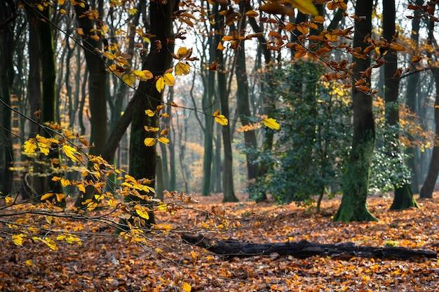 Close de galhos de árvores cobertos de folhas, cercados por árvores em uma floresta no outono