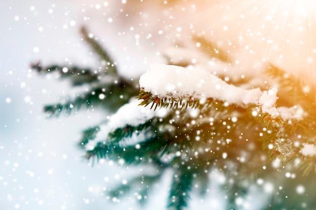 Close de galhos de pinheiros verdes cobertos de neve no inverno