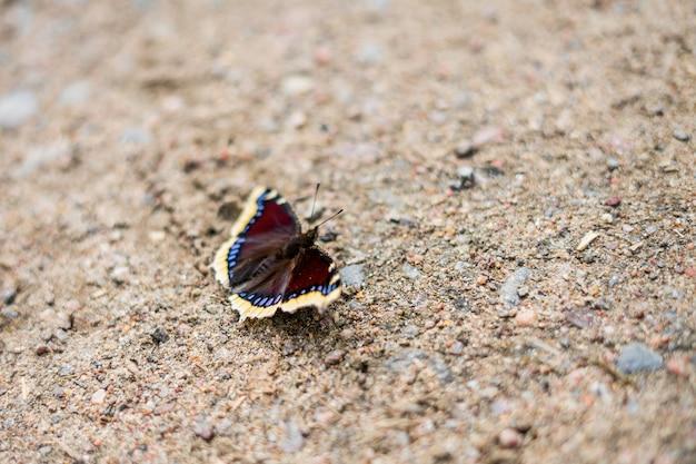 Close de lindas borboletas na natureza