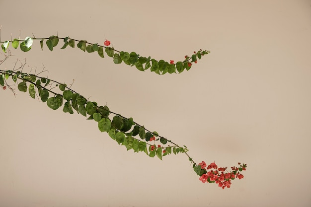 Close de lindas flores vermelhas e folhas de plantas tropicais verdes exuberantes contra a parede bege.