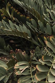 Close de lindas folhas verdes exuberantes de plantas tropicais