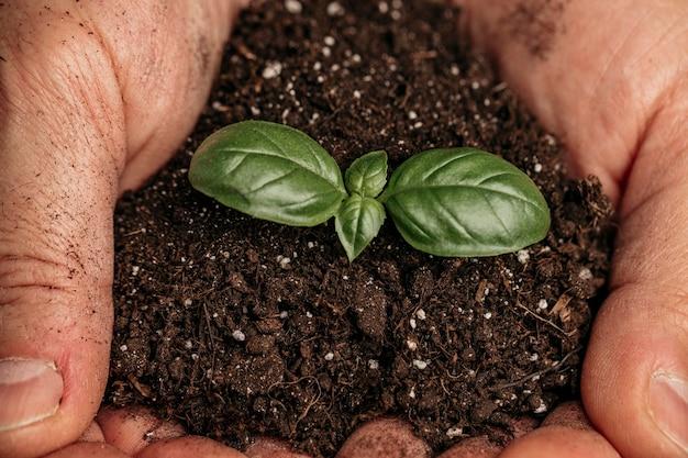 Close de mãos masculinas segurando o solo e uma planta em crescimento