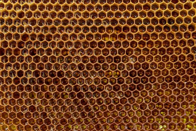 Close de mel. mel doce âmbar em favo de mel. padrão de favo de mel.